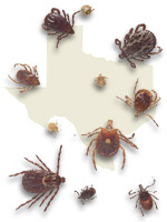 photo of ticks